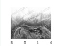 2014 Cat Wall Calendar pencil drawings wall art