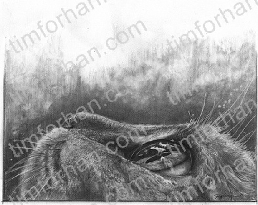 up-cat-animal-pencil-drawing-an010