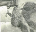 thirsty-cat-cat-pencil-drawing-c003