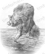 c008-fatal-attraction-cat-pencil-drawing-2.jpg