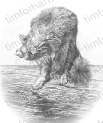 fatal-attraction-cat-pencil-drawing-c008