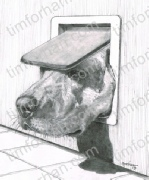 one-size-dogs-pencil-drawing-d012