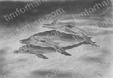 three-dolphins-marine-life-pencil-drawing-w001