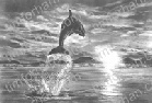 porpoise-to-the-light-marine-life-pencil-drawing-w002