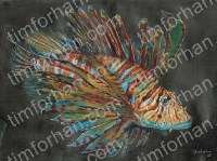 lion-fish-marine-life-colored-pencil-drawing-w003
