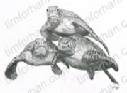 quorum-marine-life-pencil-drawing-w008