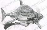 great-white-smiley-marine-life-pencil-drawing-w011